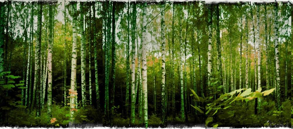 natur_9.jpg