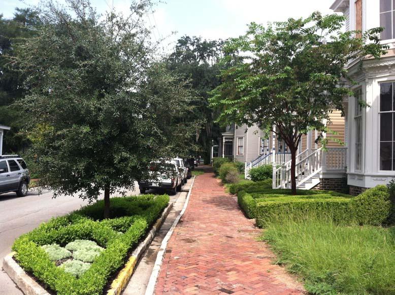 tree in streetx
