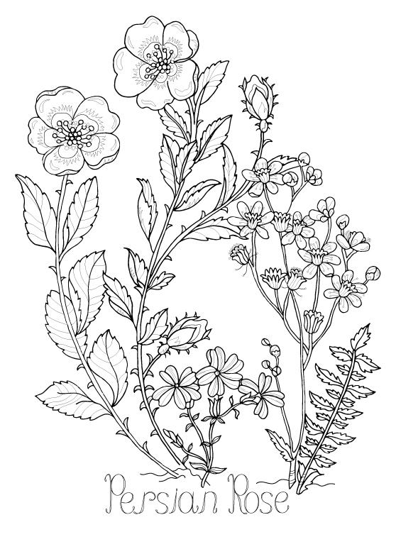 botanical-floral-#8.jpg