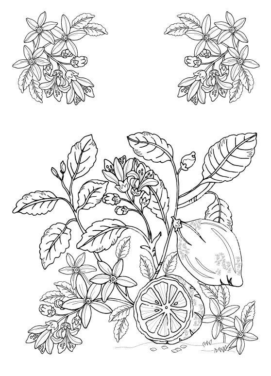 LB_001_botanical1.jpg