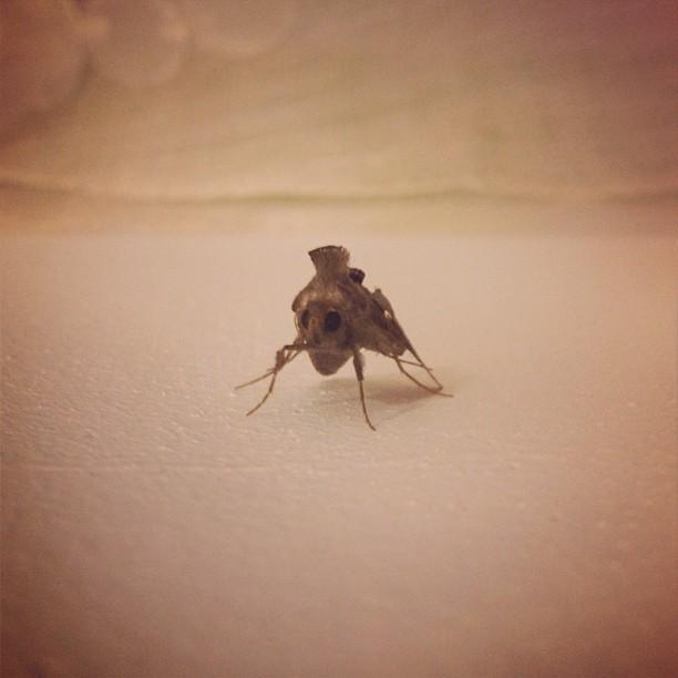 Epi l poze pou m fe foto l! #insect