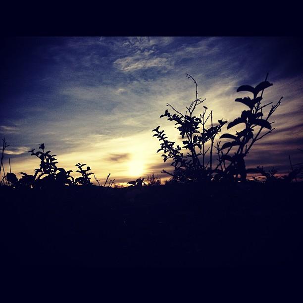 L'AUBE  #sunrise #ayitise #haiti #landscape #silhouette #sky #morning #inspired #thankyou #stcyrHotel  (at St Cyr Hotel)