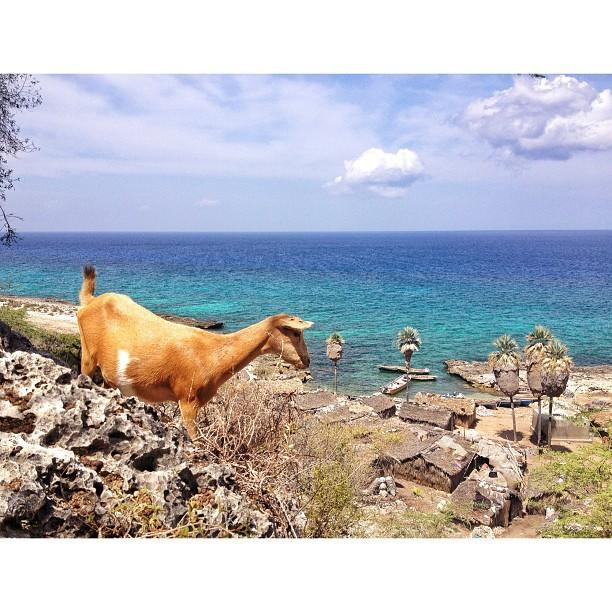 Le gardien #kapafou #molestnicolas #haiti #haititourism #village #goat #landscape #sky #thankyou #ayitise
