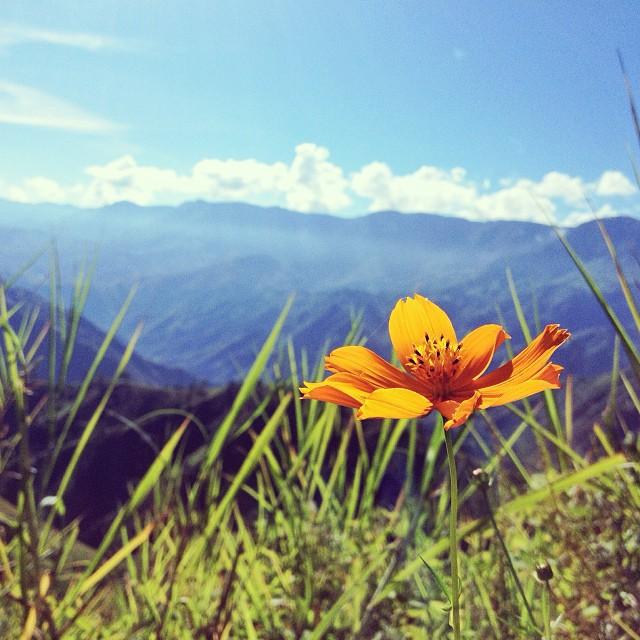 Soli Flamme #flower #mountain #landscape #haiti #HaitiTourism #thankyou #ayitise #inspired #furcy