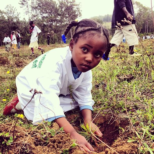 Yon timoun,yon pyebwa @kakositoayiti #reboisement #pins #trees #nature #haiti #mountain #montagnes #timoun #children #environment