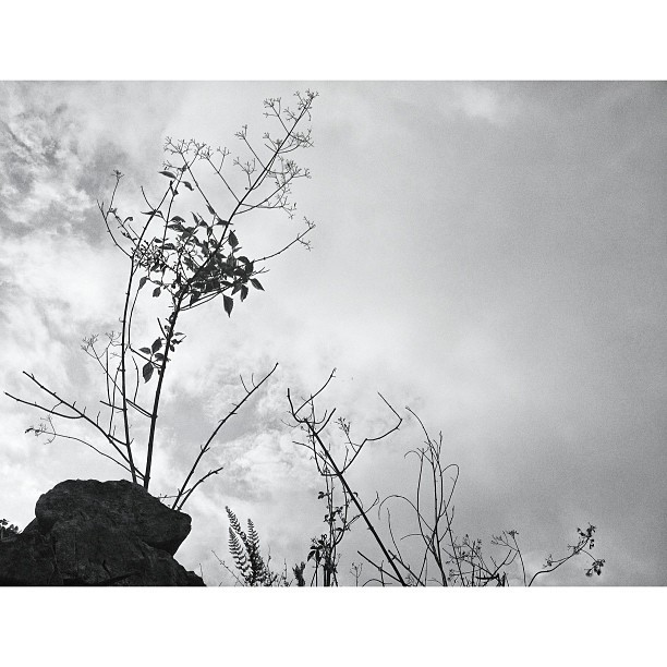 #landscape #silhouette #blackandwhite #InstaSize #haiti #haititourism