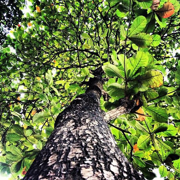The bwa! #anbazanmann #trees #photography