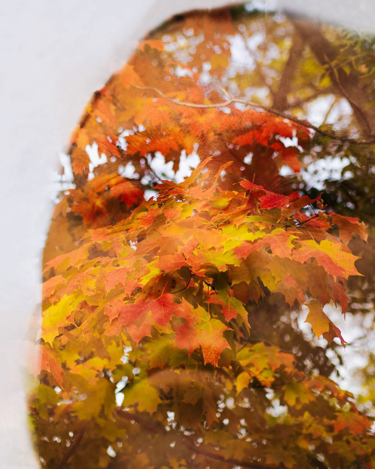 Really Inspiring!!!      penreadygallery :     Do you have fall on your mind?    In the comments credit: Olympus Visionary pro photographer Jamie A MacDonald uses the double exposure on the OM-D E-M5 with the 45mm f1.8 lens.