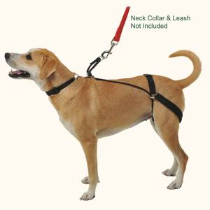 No-Pull Harnesses: Just 'cause you can doesn't mean you should ...