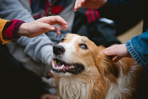 Greeting with strangers skills kindred companions llc your dog needs to learn to remain calm while allowing a friendly stranger to greet you your dog should be able to remain seated at your side while you m4hsunfo