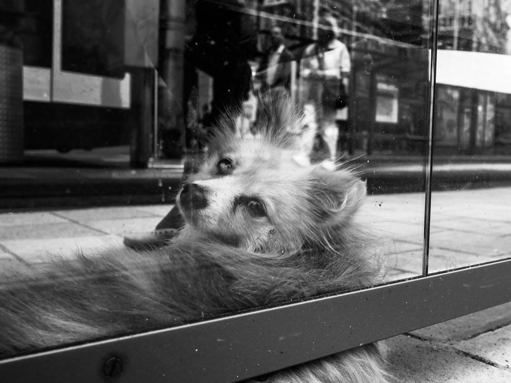 fokko muller street photography - 140628 - 007.jpg
