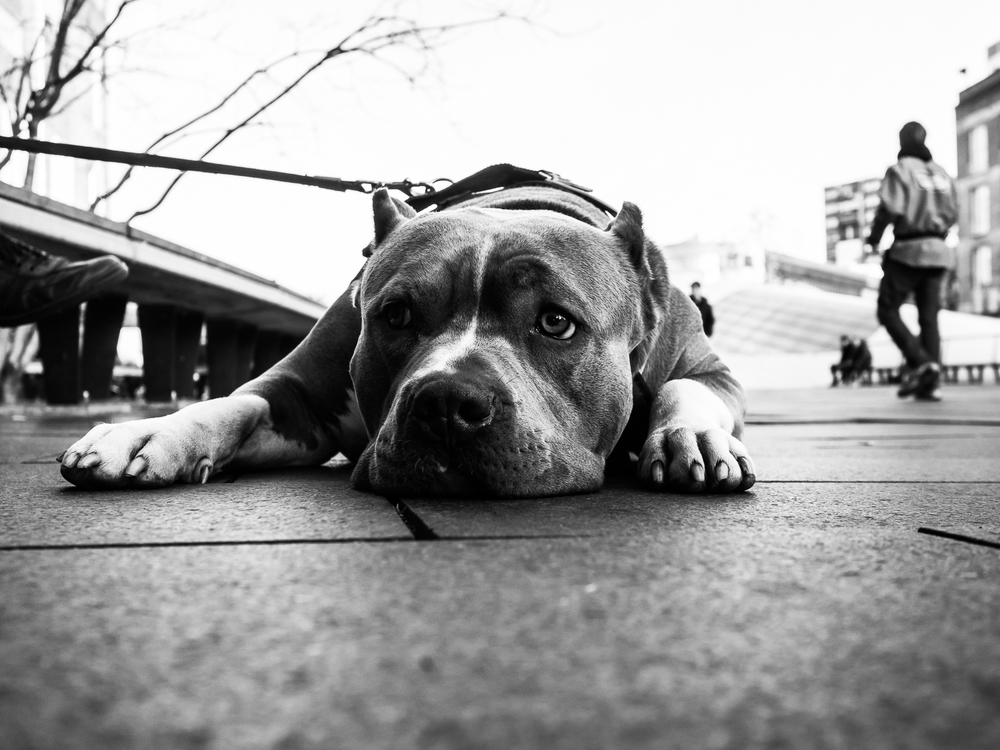 fokko muller street photography - 141108 - 009.jpg