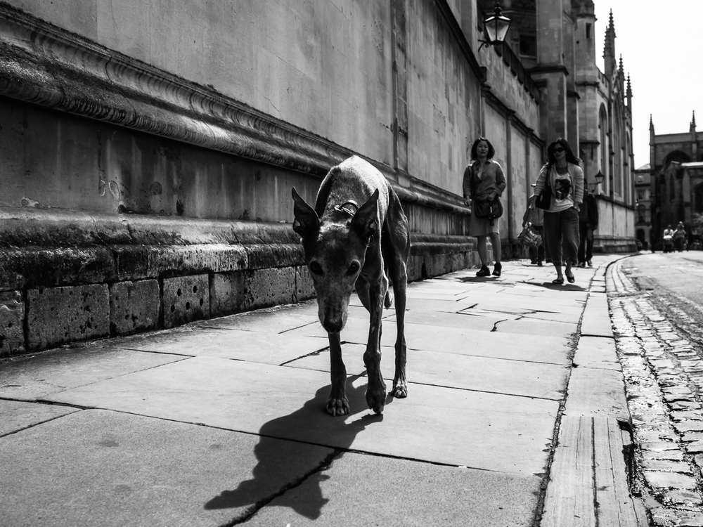"Oxford 2014 - part of my ""Street Dogs"" project"