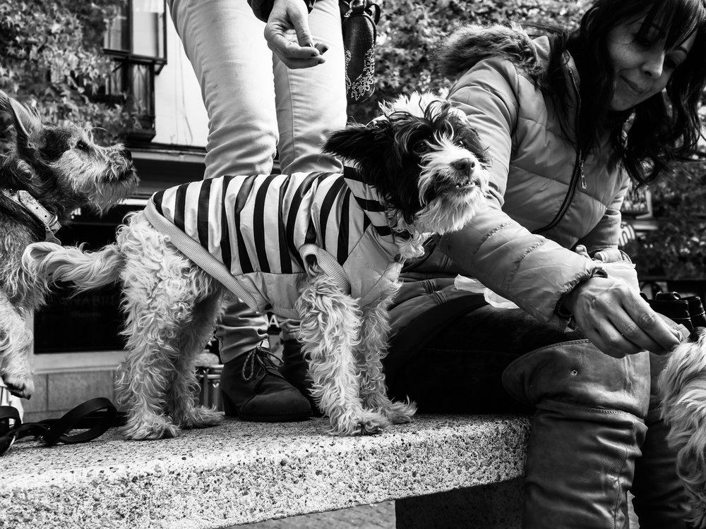 fokko muller street photography - 151202 - 007.JPG