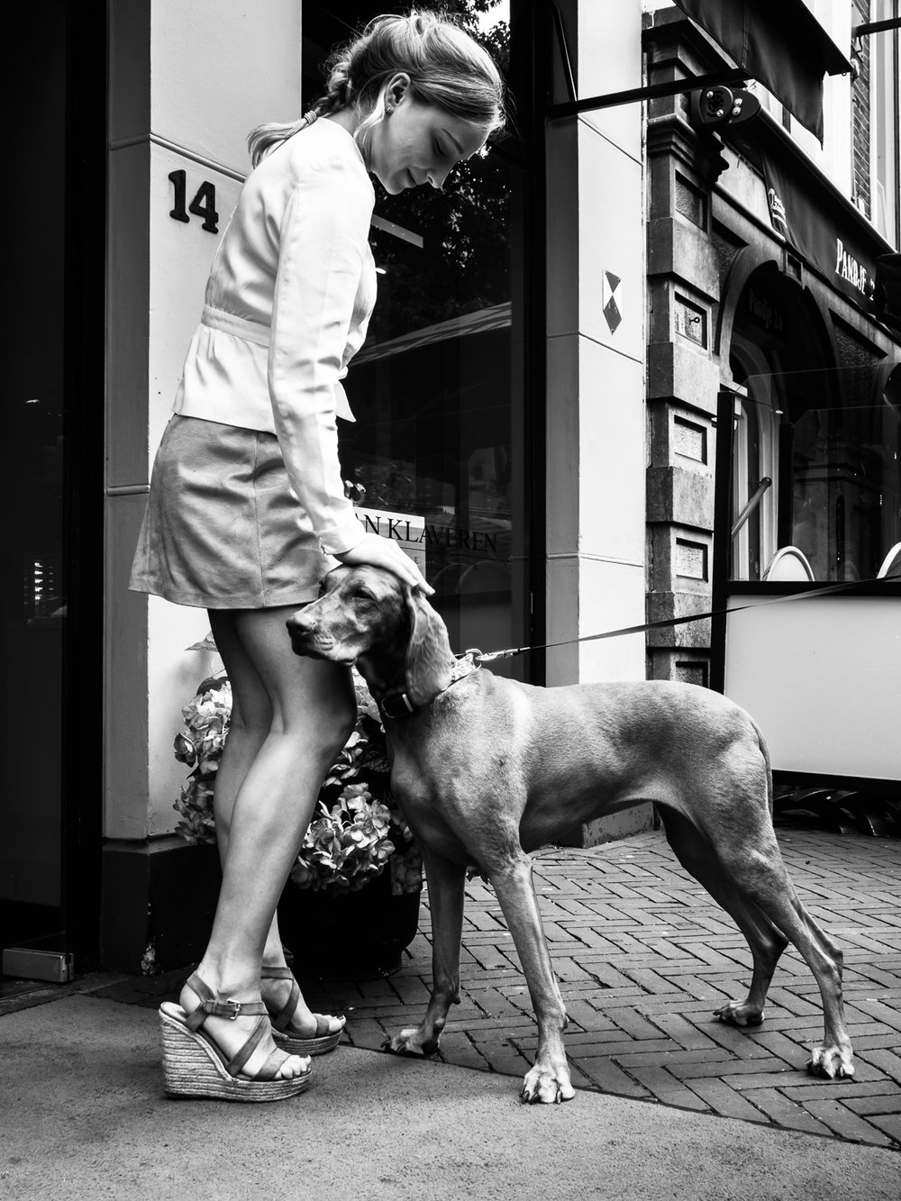 "Photo taken in Zwolle in July 2017. Zwolle is my home town, but I didn't take much time so far to walk around. It's actually a very nice ""Hanzestad"". Nice people, nice shops and very nice dogs. Another one for my   Street Dogs series .   Shot with Olympus OMD1 Mark 2 and Olympus 17mm f/1.8."