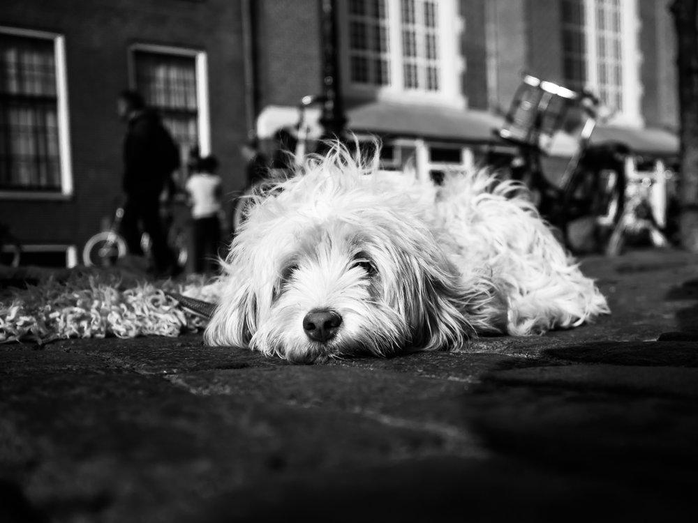 fokko muller street photography - 180407 - 005.jpg