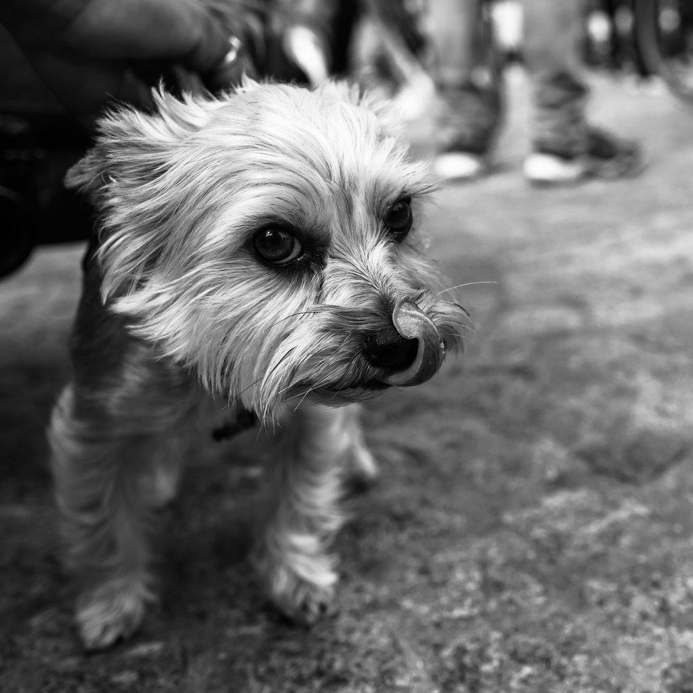 fokko muller street photography - 180908 - 004.jpg