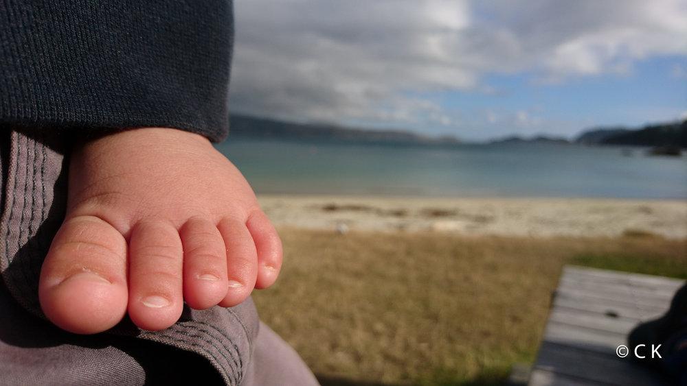 Pied potelé sur Wellington Harbour...