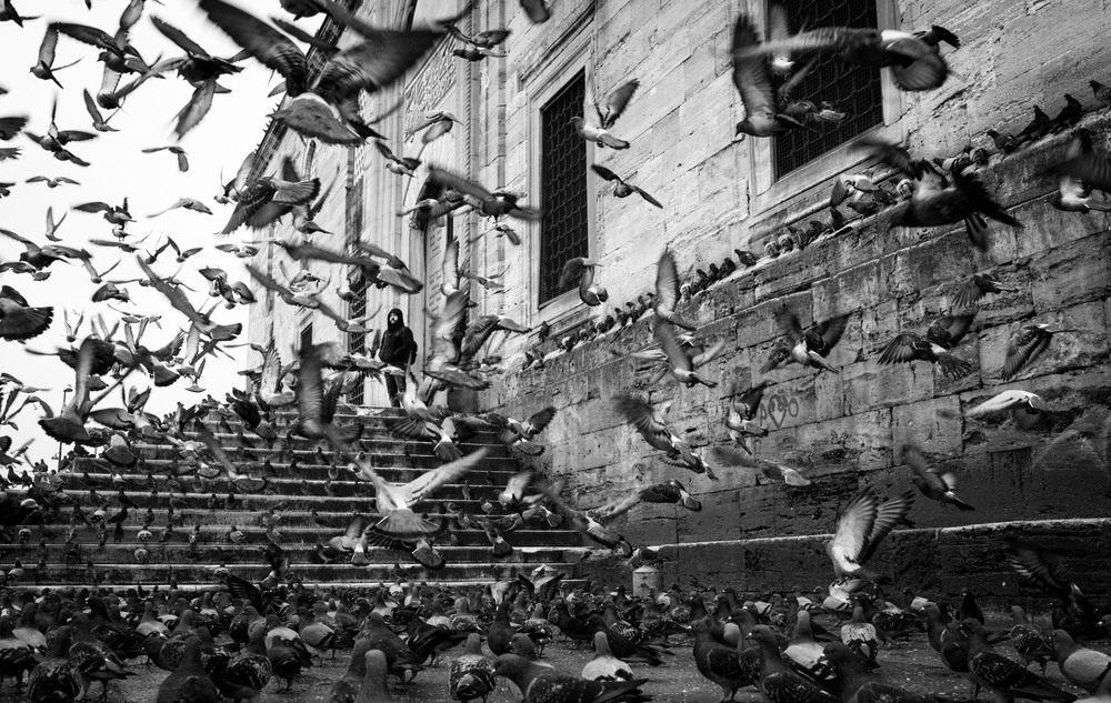 Pigeons in Istanbul Jan 2013.jpg