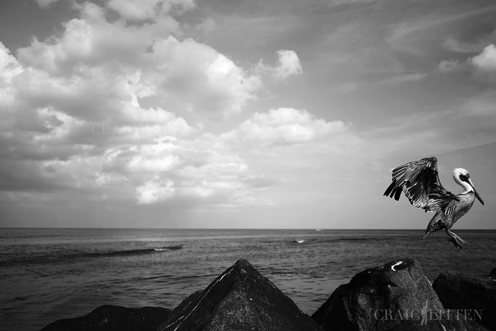 ©2016 CRAIG LITTEN