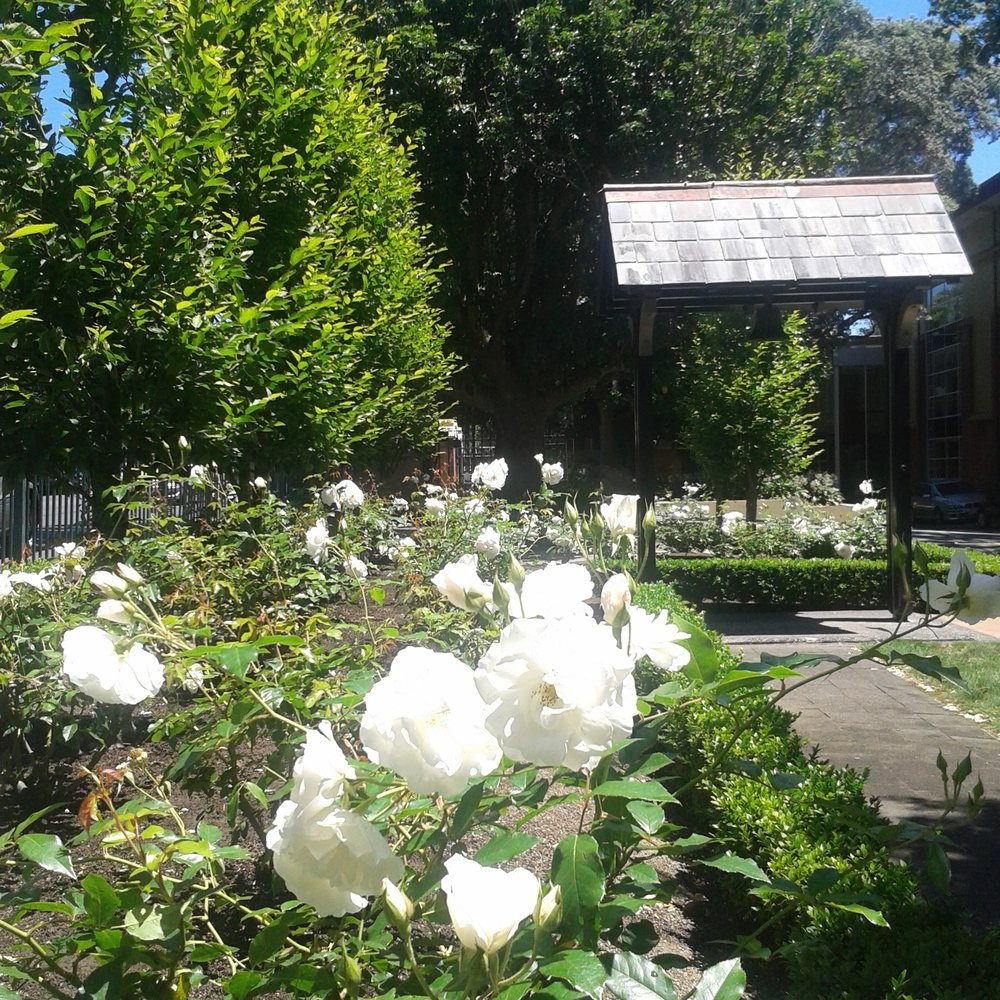 REMUERA | KING'S SCHOOL CHAPEL GARDEN