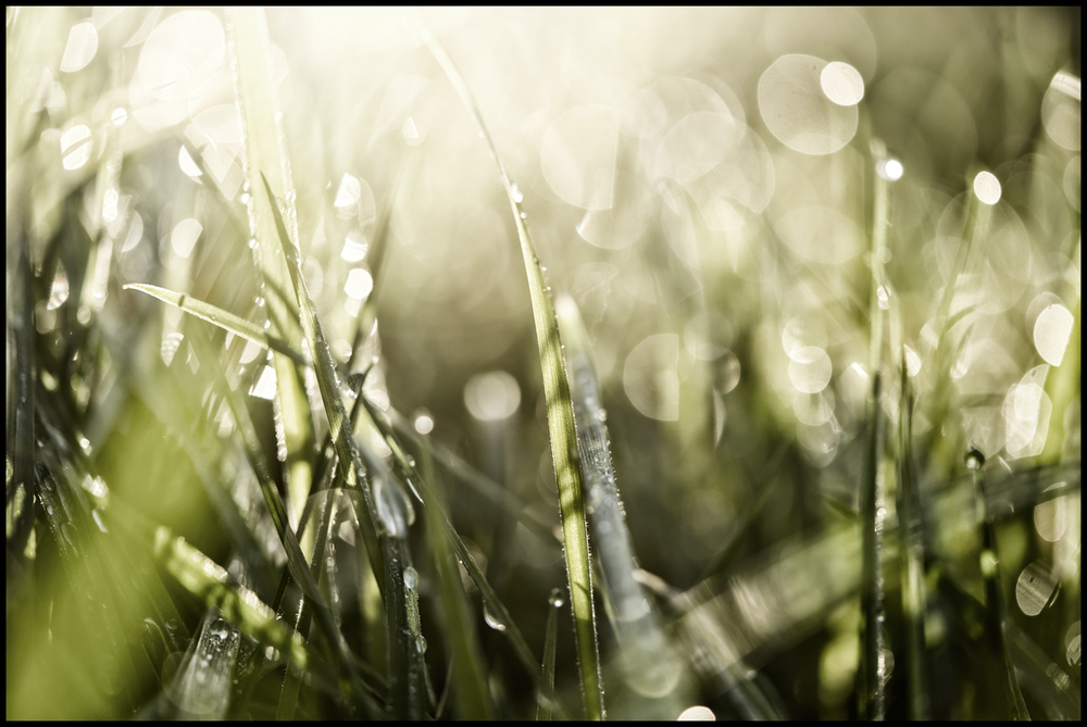 Early morning dew on the grass.