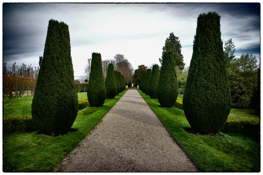 Ornamental trees at Erddig.