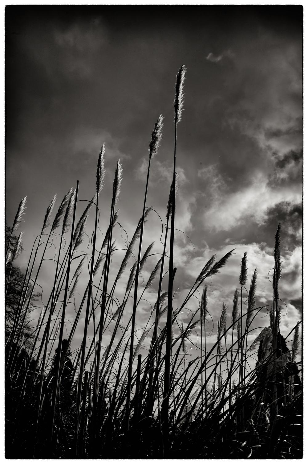 Long grass, low sun, Chirk Castle gardens.
