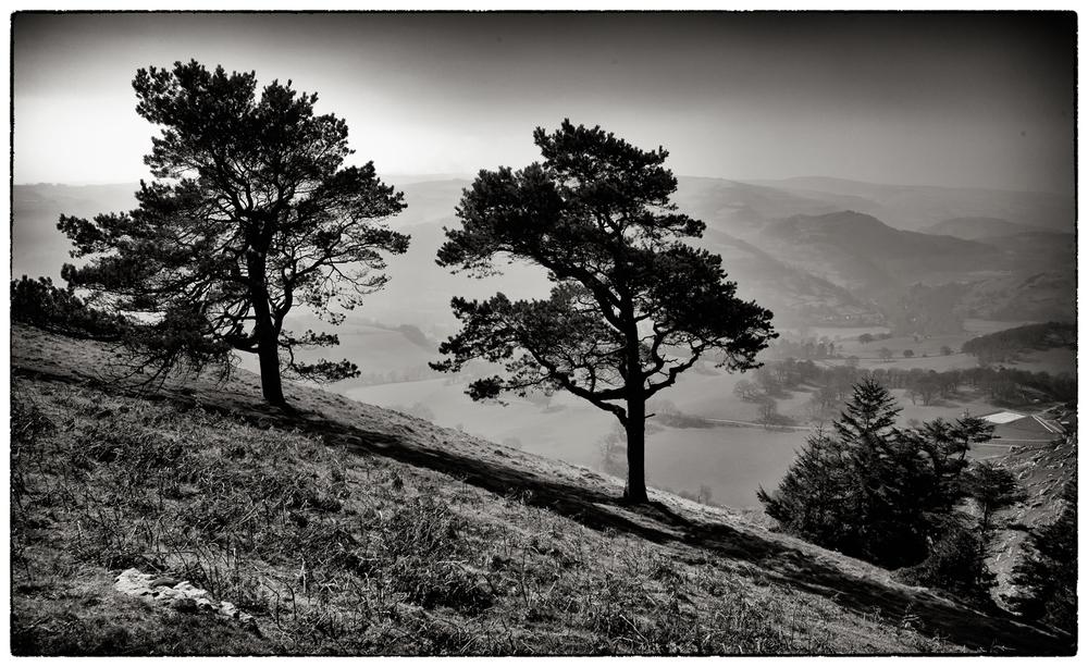 Trees on the hillside, Llangollen.