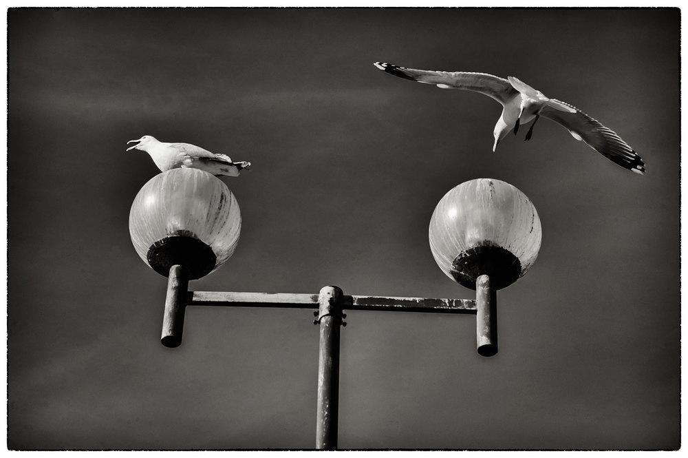 Seagulls over Tesco, Porthmadog.
