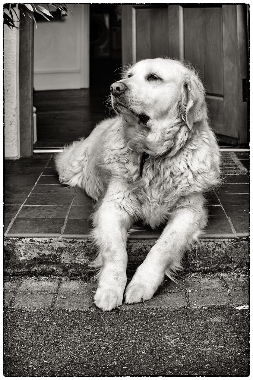 Harley, lord of the manor.  In his usual place on the doorstep.  No-one goes in or out without him letting them!!