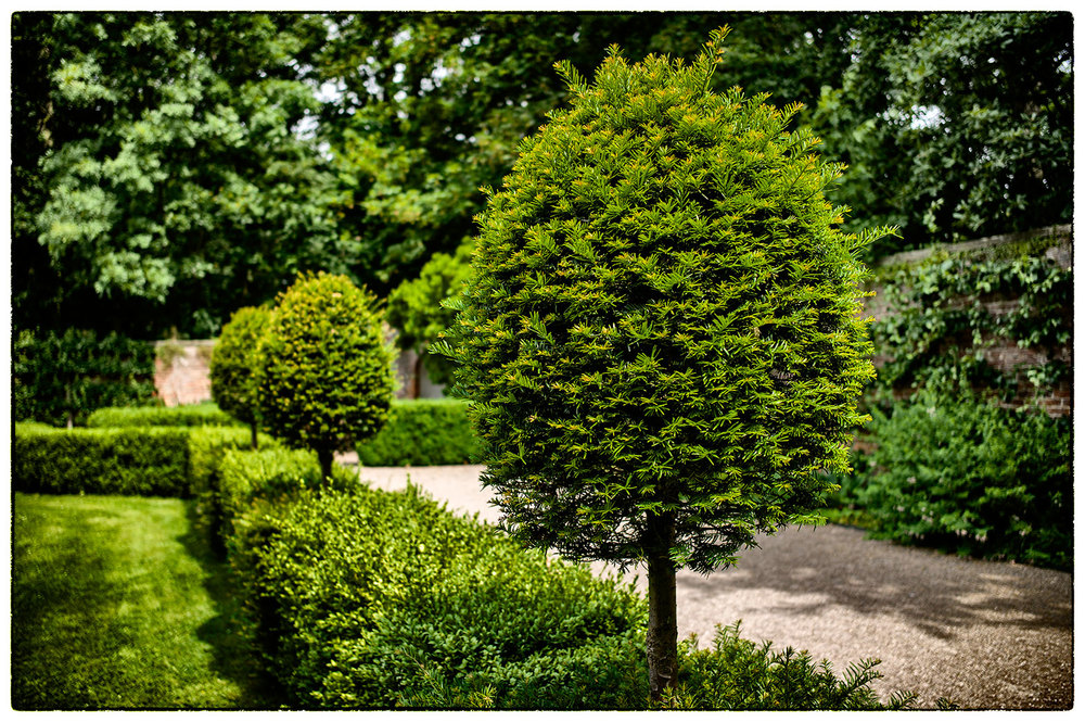 Loving the topiary and the beautiful lush greens to be found in the gardens at Erddig.