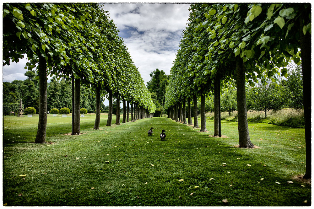 Symmetrical limes, asymmetrical ducks.