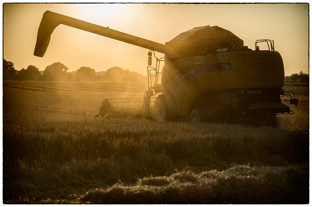 Harvesting just before sunset.