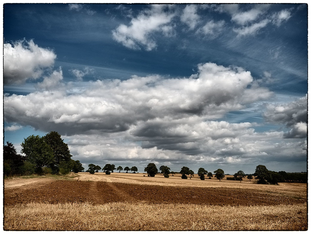 Line of trees above East Kirkby, Lincolnshire.