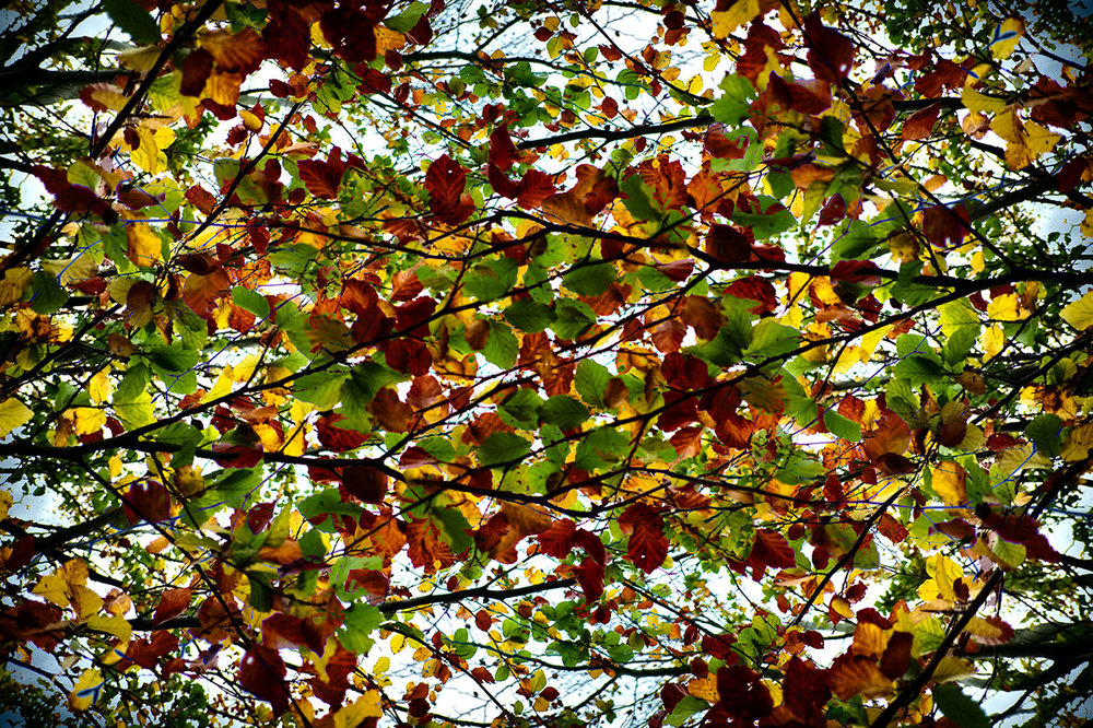 Autumn leaves collage.