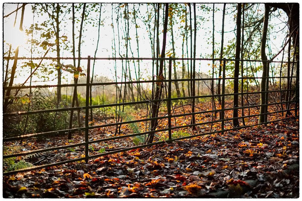 Bright autumn sunshine on this morning's dog walk.