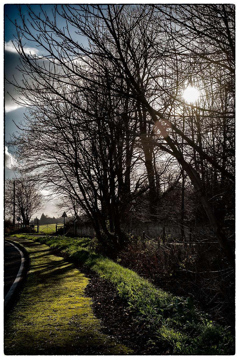 Winter_sun_2539.jpg