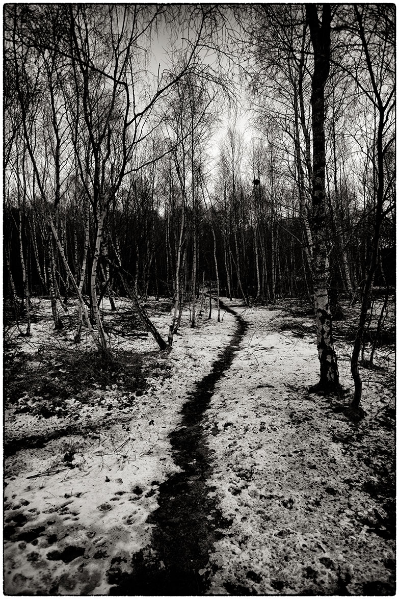 A path through the woods.  Out walking with the dog this afternoon.