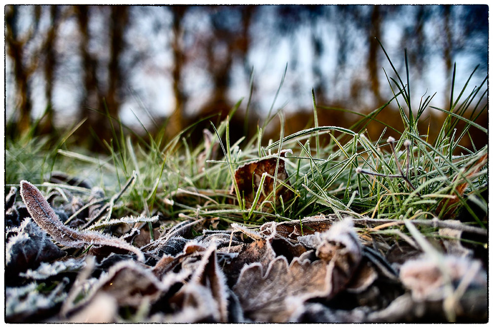 Frosty this morning, out for a walk with the dog.