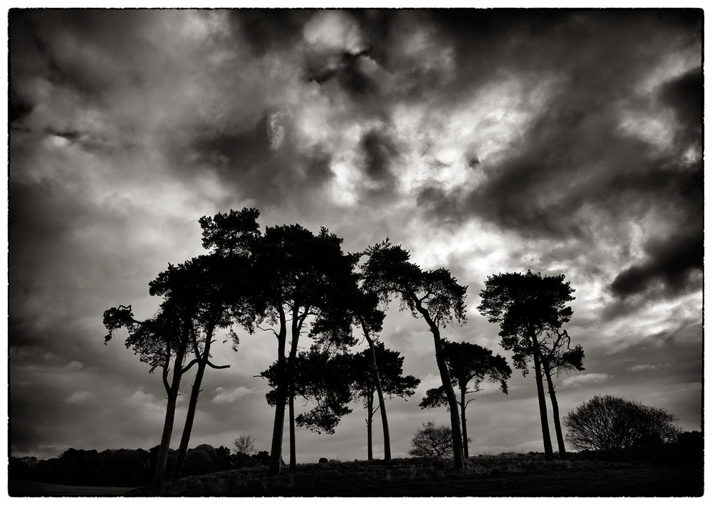 Clump of trees, Kelsall, this morning.