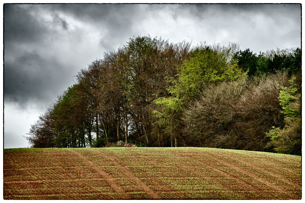 More colours of spring with crops starting to break through the soil.