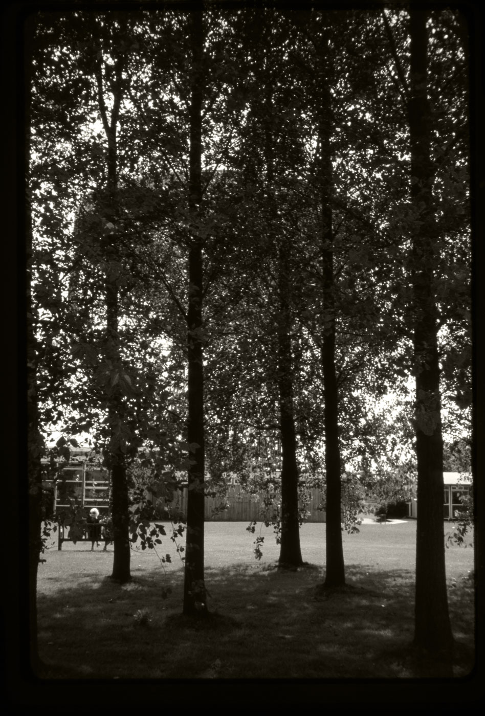 From the 35mm archive.Jodrell bank seen through the trees. From the late 70s.