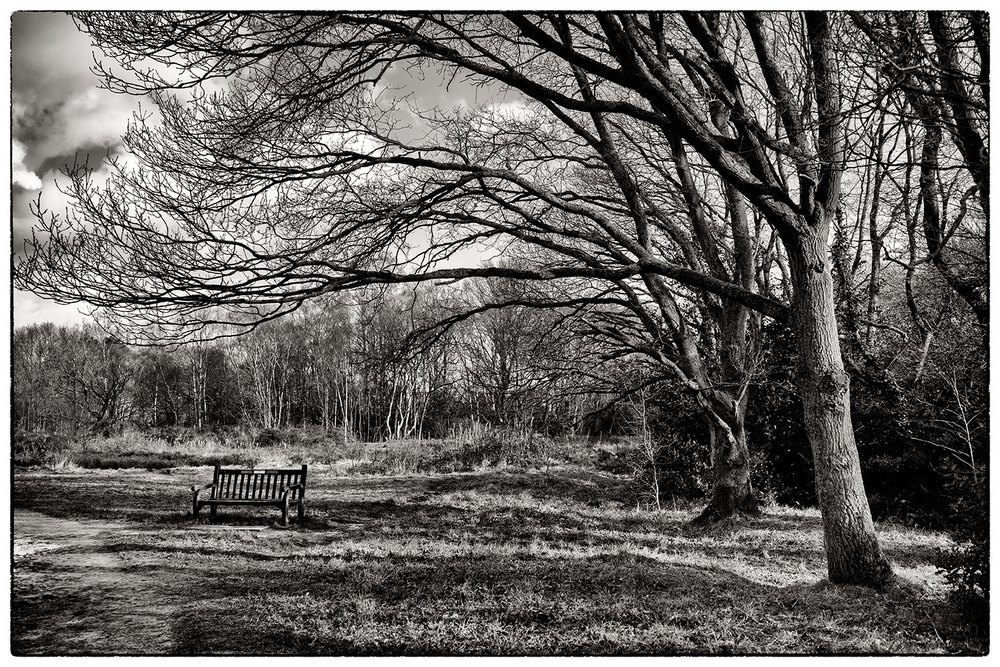 Another shot from Lindow Common.