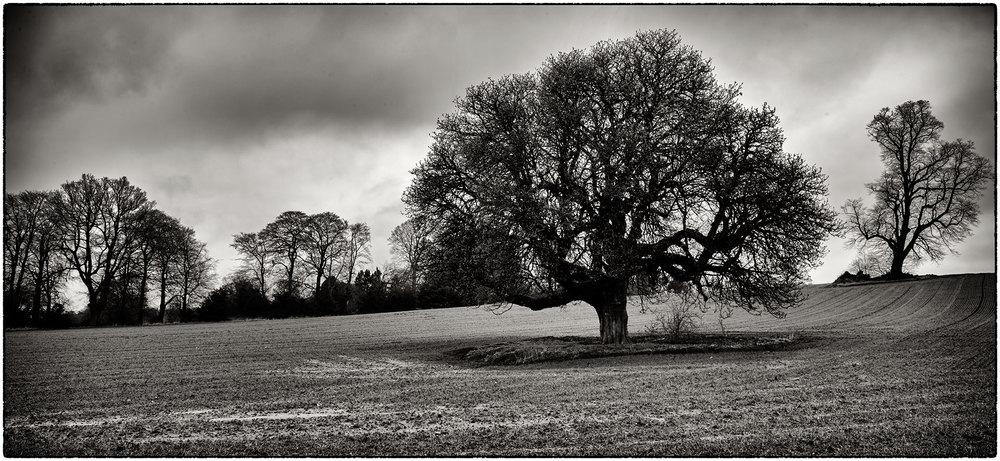 Near Cefn Park, Wrexham.