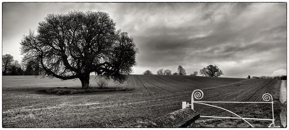 Another angle from yesterday afternoon near Cefn Park, liked the shape of the gate in the corner.