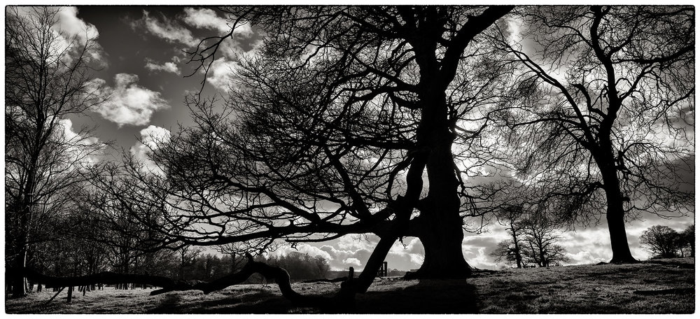 In the grounds of Chirk Castle.