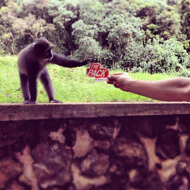 The Pack is growing! @merrelloutside #bemerrell #merrellpack #kilimanjaro #adventure