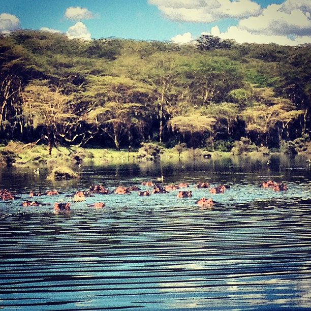 Beautiful day on Lake Naivasha with the hippos…  #adventure #kenya #hippos #travel