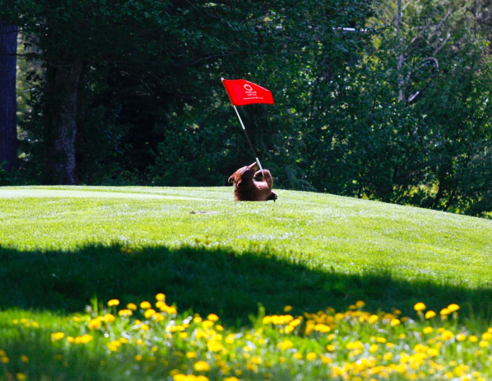 WGC bear with Flag smaller.jpg